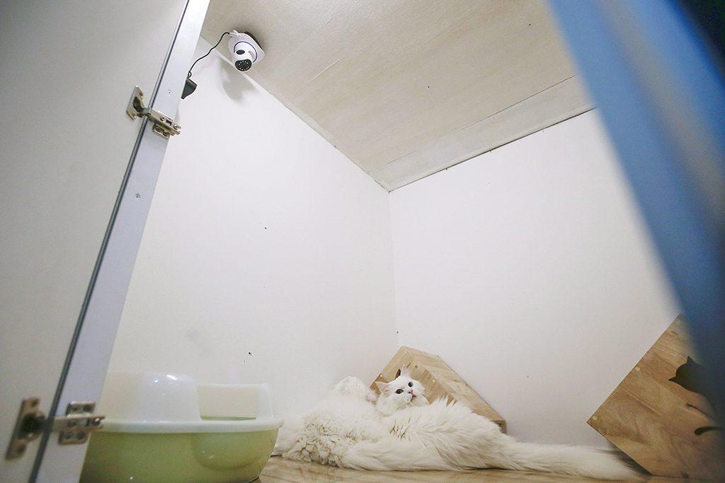 Damansara, 2017. február 8.Biztonsági kamera a malajziai Damansarában lévő Catzonia macskahotelben 2017. február 7-én. A tulajdonosok három órától egy évig foglalhatnak szobát házikedvencüknek az ötcsillagos, 35 szobás macskahotelben, ahol 24 órás felügyeletet, ellátást és játékos foglalkozást biztosítanak számukra. (MTI/EPA/Fazry Ismail)