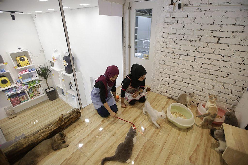 Damansara, 2017. február 8.Alkalmazottak játszanak a cicákkal a Nagyon-nagyon Fontos Macskák lakrészében a malajziai Damansarában lévő Catzonia macskahotelben 2017. február 7-én. A tulajdonosok három órától egy évig foglalhatnak szobát házikedvencüknek az ötcsillagos, 35 szobás macskahotelben, ahol 24 órás felügyeletet, ellátást és játékos foglalkozást biztosítanak számukra. (MTI/EPA/Fazry Ismail)