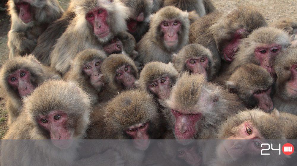 fajok közötti orgiák tini fasz hatalmas kakasok