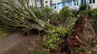 A picture taken on March 6, 2017 shows a falling tree which caused three injured in a high school in Carhaix-Plouguer, western of France, as strong winds sweeping in Brittany.  / AFP PHOTO / FRED TANNEAU