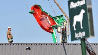 Budakalász, 2012. augusztus 30.Az Auchan felirat madarat formázó A betűjét daruval emelik helyére a budakalászi volt Cora áruház homlokzatára 2012. augusztus 30-án. Az Auchan csoport idén tavasszal vásárolta fel a magyarországi Cora áruházakat.MTI Fotó: Máthé Zoltán