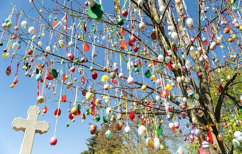 Csallóközcsütörtök, 2017. április 10.Hímes tojásokkal feldíszített fa a felvidéki Csallóközcsütörtök főterén 2017. április 10-én. A fát mintegy ezerhatszáz darab tojással díszítették fel a közelgő húsvéti ünnepre a település fennállásának 800. évfordulója alkalmából.MTI Fotó: Krizsán Csaba