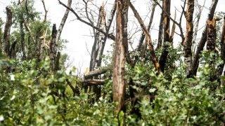 Bugac, 2016. július 14. Kidõlt, megtépázott nyárfák vihar után Bugacon 2016. július 14-én. MTI Fotó: Ujvári Sándor