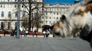 Budapest, 2017. március 21. Emberek ülnek egy padon a tavaszias idõben a fõvárosi Március 15. téren 2017. március 21-én. MTI Fotó: Balogh Zoltán