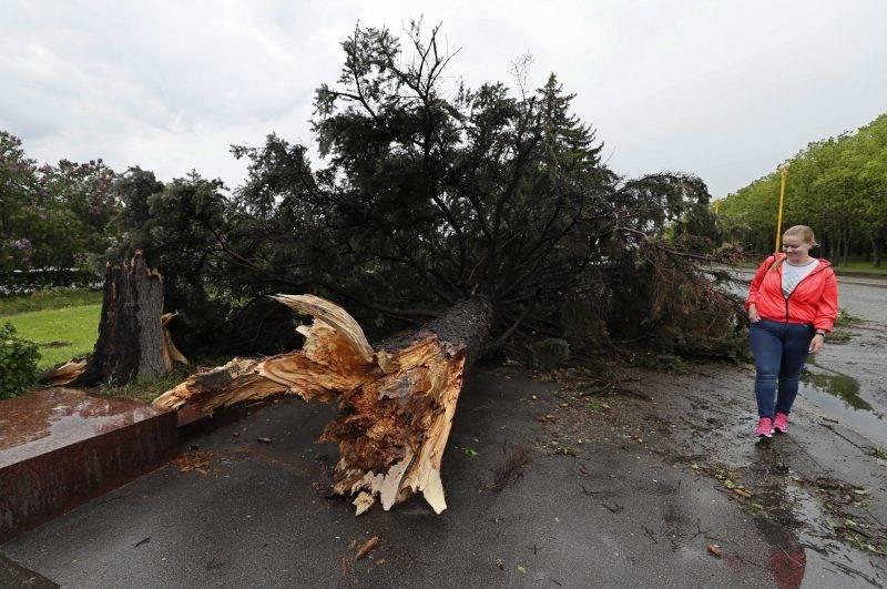 Moszkva, 2017. május 29. Kidõlt fa Moszkvában 2017. május 29-én, miután vihar volt az orosz fõvárosban és környékén. Tizenegy ember életét vesztette, több tucatnyian megsérültek. (MTI/EPA/Jurij Kocsetkov)