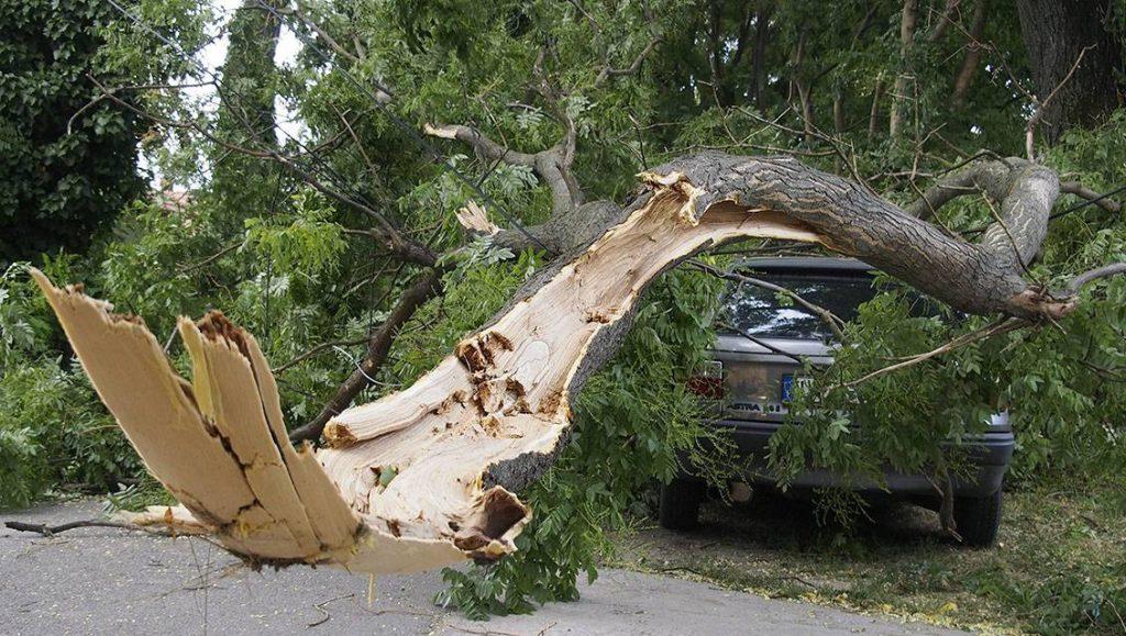 Csongrád, 2015. július 8.A szélviharban kidőlt és egy autóra zuhant fa Csongrádon, a Justh Gyula utcában 2015. július 8-án.MTI Fotó: Donka Ferenc