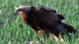 Állatok a Pacsmagi Halastavak Természetvédelmi Területen