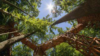 Kaszó, 2017. május 14. A fák koronái között futó lombkorona tanösvény részlete a Somogy megyei Kaszón 2017. május 14-én. A napokban átadott, mintegy 50 millió forintból megvalósuló beruházás keretében 9,5 méter magasan és 124 méter hosszan készült el a tanösvény. MTI Fotó: Varga György