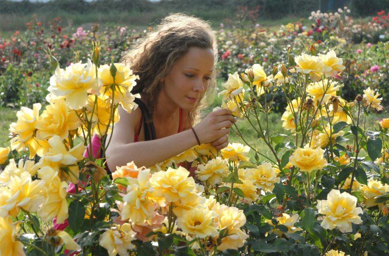Budapest, 2008. május 29. Egy látogató a kerti rózsákat nézi Budatétényben az Érdi Gyümölcs- és Dísznövénytermesztési Kutató, Fejlesztõ Kht. rózsakertjében, ahol mintegy 1300 fajta, köztük 200 magyar nemesítésû rózsafajta látható. MTI Fotó: Czimbal Gyula