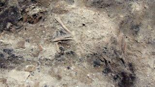 Róma, 2017. június 26. Az olasz kulturális minisztérium által 2017. június 26-án közreadott képen egy 1800 éves kutyacsontváz részlete látható, amely valószínûleg tûzben pusztult el. Régészek feltételezik, hogy a kutya egy harmadik századbeli arisztokrata házat részben elemésztõ tûz áldozatává vált. A háznak és berendezéseinek, bútorainak, állatainak maradványai Róma harmadik metróvonalának ásatásánál kerültek elõ 10 méteres mélységben május 23-án. A leletegyüttest római Mini-Pompejinek nevezték el. (MTI/AP/Olasz kulturális minisztérium)