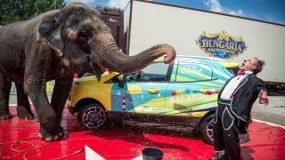 Autómosó elefánt a Balatonon
