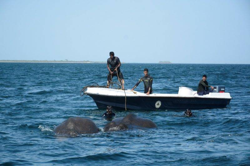 """In this handout photograph released by the Sri Lankan Navy on July 23, 2017, Sri Lankan naval personnel help guide elephants that were spotted struggling to stay afloat in deep water back to shore a kilometre off the island's northeast coast. Two young elephants washed out to sea were saved from drowning July 23 by the Sri Lankan navy in the second such incident off the island in as many weeks. The navy said the pair of wild elephants were brought ashore after a """"mammoth effort"""" involving navy divers, ropes and a flotilla of boats to tow them back to shallow waters. RESTRICTED TO EDITORIAL USE - MANDATORY CREDIT """"AFP PHOTO / SRI LANKAN NAVY"""" - NO MARKETING NO ADVERTISING CAMPAIGNS - DISTRIBUTED AS A SERVICE TO CLIENTS - NO ARCHIVE - XGTY / AFP PHOTO / Sri Lankan Navy / STR / RESTRICTED TO EDITORIAL USE - MANDATORY CREDIT """"AFP PHOTO / SRI LANKAN NAVY"""" - NO MARKETING NO ADVERTISING CAMPAIGNS - DISTRIBUTED AS A SERVICE TO CLIENTS - NO ARCHIVE - XGTY"""