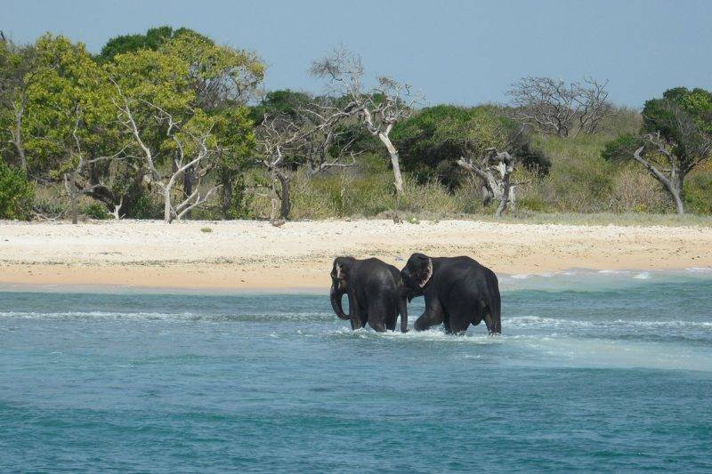 """In this handout photograph released by the Sri Lankan Navy on July 23, 2017, elephants spotted struggling to stay afloat in deep water walk back to shore after being rescued by Sri Lankan navel personnel off the island's northeast coast. Two young elephants washed out to sea were saved from drowning July 23 by the Sri Lankan navy in the second such incident off the island in as many weeks. The navy said the pair of wild elephants were brought ashore after a """"mammoth effort"""" involving navy divers, ropes and a flotilla of boats to tow them back to shallow waters. RESTRICTED TO EDITORIAL USE - MANDATORY CREDIT """"AFP PHOTO / SRI LANKAN NAVY"""" - NO MARKETING NO ADVERTISING CAMPAIGNS - DISTRIBUTED AS A SERVICE TO CLIENTS - NO ARCHIVE - XGTY / AFP PHOTO / Sri Lankan Navy / STR / RESTRICTED TO EDITORIAL USE - MANDATORY CREDIT """"AFP PHOTO / SRI LANKAN NAVY"""" - NO MARKETING NO ADVERTISING CAMPAIGNS - DISTRIBUTED AS A SERVICE TO CLIENTS - NO ARCHIVE - XGTY"""