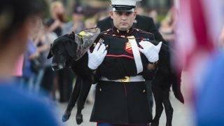 Muskegon, 2017. július 28.Az amerikai tengerészgyalogság szolgálatában álló Cenát, a tízéves fekete labrador kant viszi gazdája, Jeff DeYoung őrvezető Cena búcsúztatásán, mielőtt az állatnál diagnosztizált aggeresszív csontrák miatt elaltattatja őt a Michigan állambeli Muskegonban 2017. július 26-án. (MTI/AP/Muskegon Chronicle/Joel Bissell)