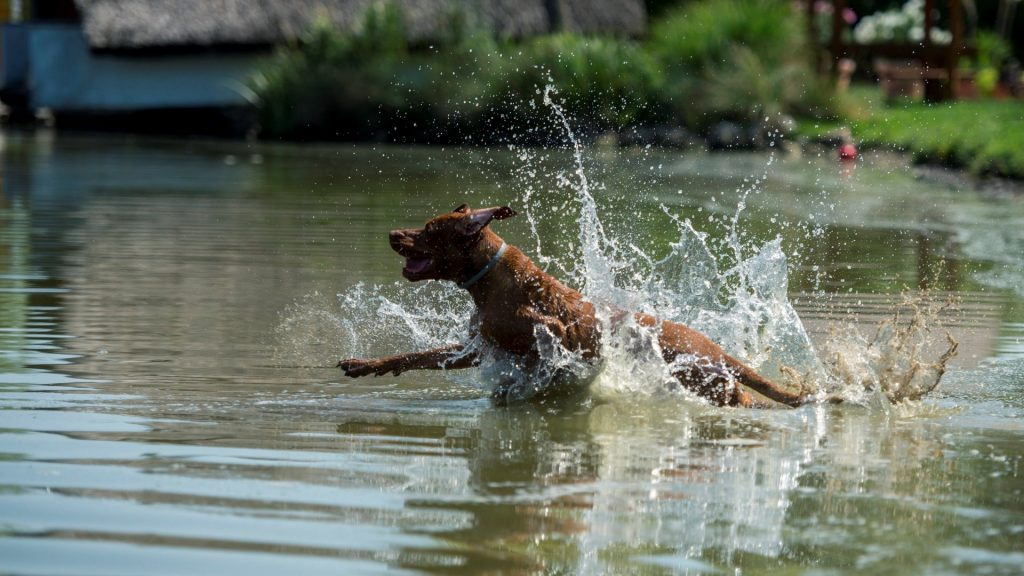 Hőség - Kutyastrand