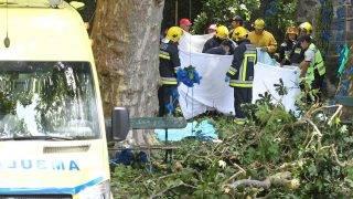 Largo da Fonte, 2017. augusztus 15. Mentõk és tûzoltók a Madeira-szigeteken fekvõ Largo da Fontében történt baleset helyszínén 2017. augusztus 15-én, ahol egy szabadtéri kegyhelyen az összegyûltekre dõlt egy hatalmas fatörzs. A balesetben 11 ember életét vesztette, 35 megsebesült. (MTI/EPA/Homem de Gouveia)