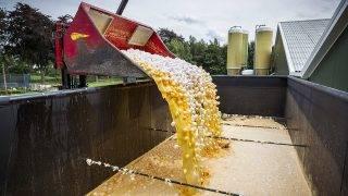 Onstwedde, 2017. augusztus 3.Markolóval öntik konténerbe a friss tojásokat egy gazdaságban, a hollandiai Onstweddében 2017. augusztus 3-án. A holland élelmiszerbiztonsági hatóság, az NVWA felfüggesztette a tojáskereskedelmet és elrendelte a tojások megsemmisítését, mert egyes gazdaságokban Fipronil rovarirtószert használtak a vörös atkák ellen, és az egészségre káros mértékű Fipronilt találtak az élelmezésre szánt tojásokban. (MTI/EPA/Vincent Jannink)