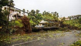 """An uprooted tree covers a small house in the village of Viard - Petit Bourg, near Pointe-a-Pitre,  on September 19, 2017 in the French territory of Guadeloupe after the passage of Hurricane Maria. Hurricane Maria headed towards the Virgin Islands and Puerto Rico on September 19, with the US National Hurricane Center warning of a """"potentially catastrophic"""" impact as it battered the eastern Caribbean. Arriving just as islanders in the region are struggling to recover from devastating Hurricane Irma which struck earlier this month, Maria claimed its first victim in the French territory of Guadeloupe, where two other people were missing.  / AFP PHOTO / Cedrick Isham CALVADOS"""