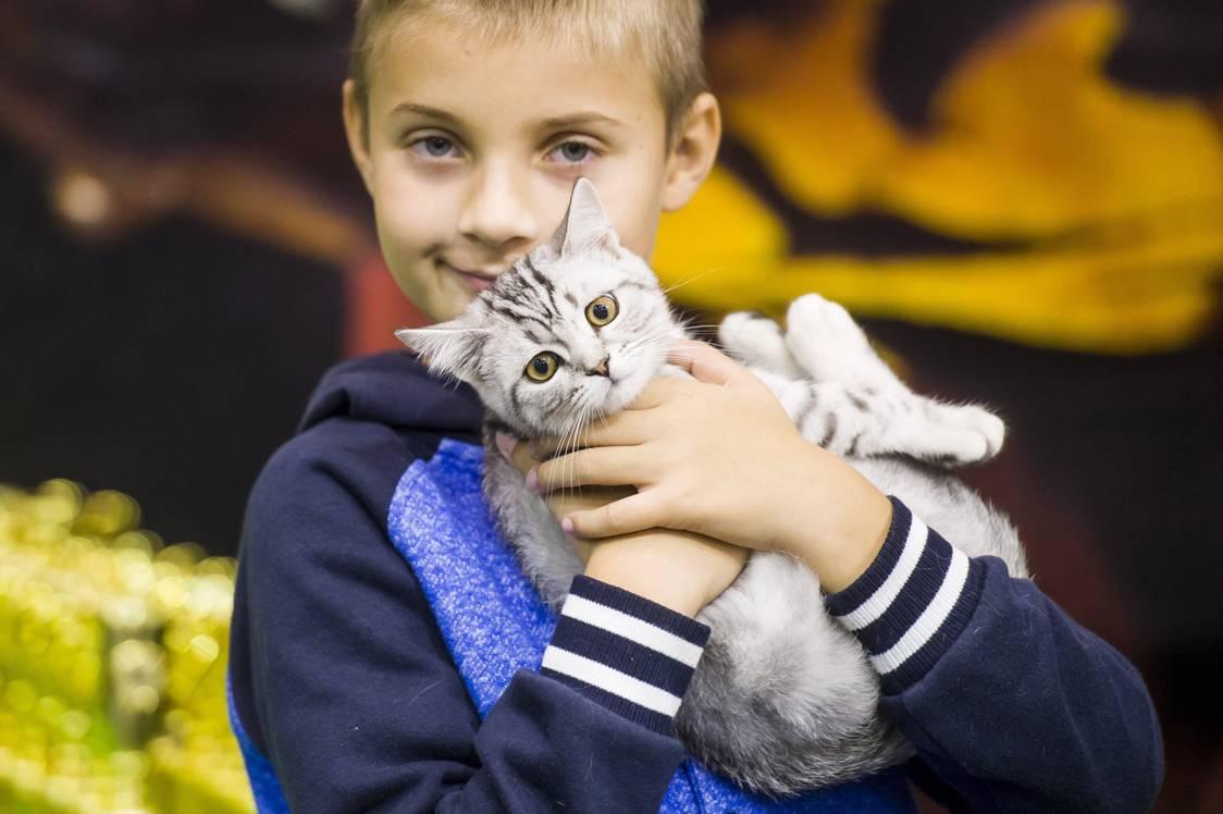 Eger, 2017. szeptember 24.Brit macska gazdájával a HungaroCat egyesület nemzetközi macskakiállításán Egerben 2017. szeptember 24-én.MTI Fotó: Komka Péter