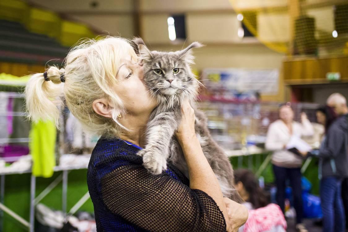Eger, 2017. szeptember 24.Maine Coon macska gazdájával a HungaroCat egyesület nemzetközi macskakiállításán Egerben 2017. szeptember 24-én.MTI Fotó: Komka Péter