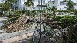 Miami, 2017. szeptember 12. Kidõlt fák egy úttesten Miamiban 2017. szeptember 11-én, az Irma hurrikán elvonulása után. Floridában a szélvihar tíz halálos áldozatot követelt. (MTI/EPA/Gerardo Mora)