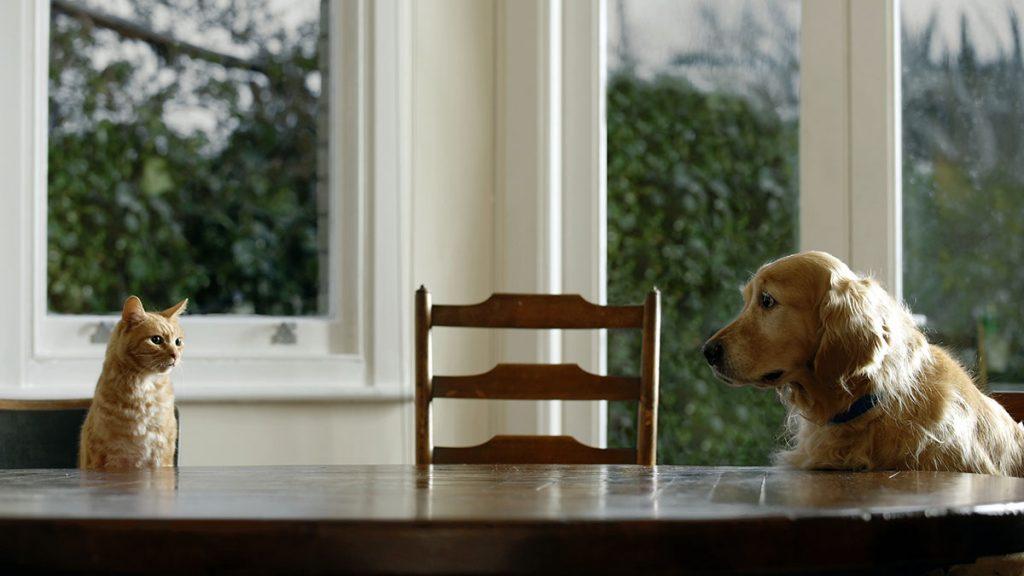 Kutya Macska Összeszoktatása | Tippek, Tanácsok | Zooplus Magazin