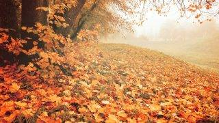 Foggy landscape. Autumn deserted park with bright fallen leaves on the foreground. Soft filter processing