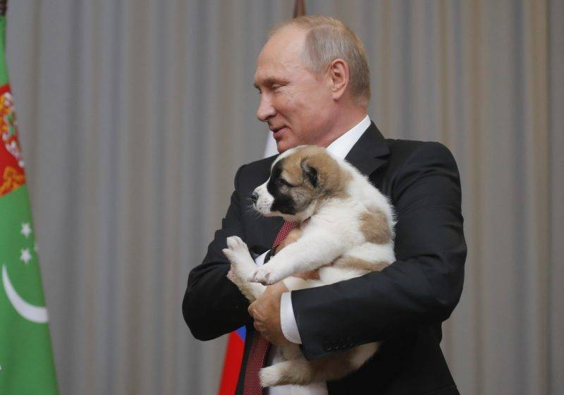 Russian President Vladimir Putin holds a Turkmen shepherd dog, locally known as Alabai, received by the Turkmenistan's president during a meeting in Sochi, on October 11, 2017.  / AFP PHOTO / POOL / MAXIM SHEMETOV