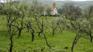 Mónosbél, 2013. május 2. Almafák virágzanak a mónosbéli templom melletti almáskertben 2013. május 2-án. A szervita rend által a XVIII. században alapított gazdasági birtokot 2011-ben tisztíttatta ki az önkormányzat, a terület 28 õshonos gyümölcsfája ezután fordult újra termõre. A batulok, piros kálvilok, Entz rozmaringok, hercegnõalmafák, aranypármenek, sikulai és jonatán fajták az 1700-as években telepített kert harmadik-negyedik generációjának tagjai lehetnek. MTI Fotó: Komka Péter