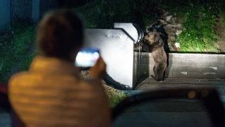 Tusnádfürdõ, 2017. június 10. Turisták fotóznak egy kukában élelmet keresõ medvét Tusnádfürdõn 2017. június 9-én este. A vadállatok az erdélyi város utcáin úgy mászkálnak, mint máshol a kóbor kutyák. MTI Fotó: Veres Nándor
