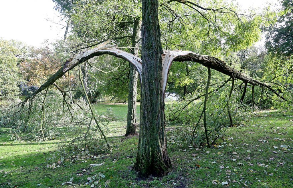 Bréma, 2017. október 6. Az Észak-Németországban tomboló, Xavier elnevezésû viharban széthasadt fák egyike Brémában 2017. október 5-én. Az óránkénti 110-120 kilométeres sebességû széllökésekkel érkezett viharban legkevesebb hét ember életét vesztette az országban, és sokan megsérültek. (MTI/EPA/Focke Strangmann)