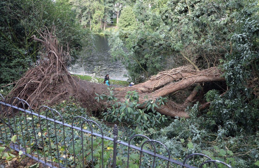 Bréma, 2017. október 6. Az Észak-Németországban tomboló, Xavier elnevezésû viharban kidõlt fák egyike Brémában 2017. október 5-én. Az óránkénti 110-120 kilométeres sebességû széllökésekkel érkezett viharban legkevesebb hét ember életét vesztette az országban, és sokan megsérültek. (MTI/EPA/Focke Strangmann)