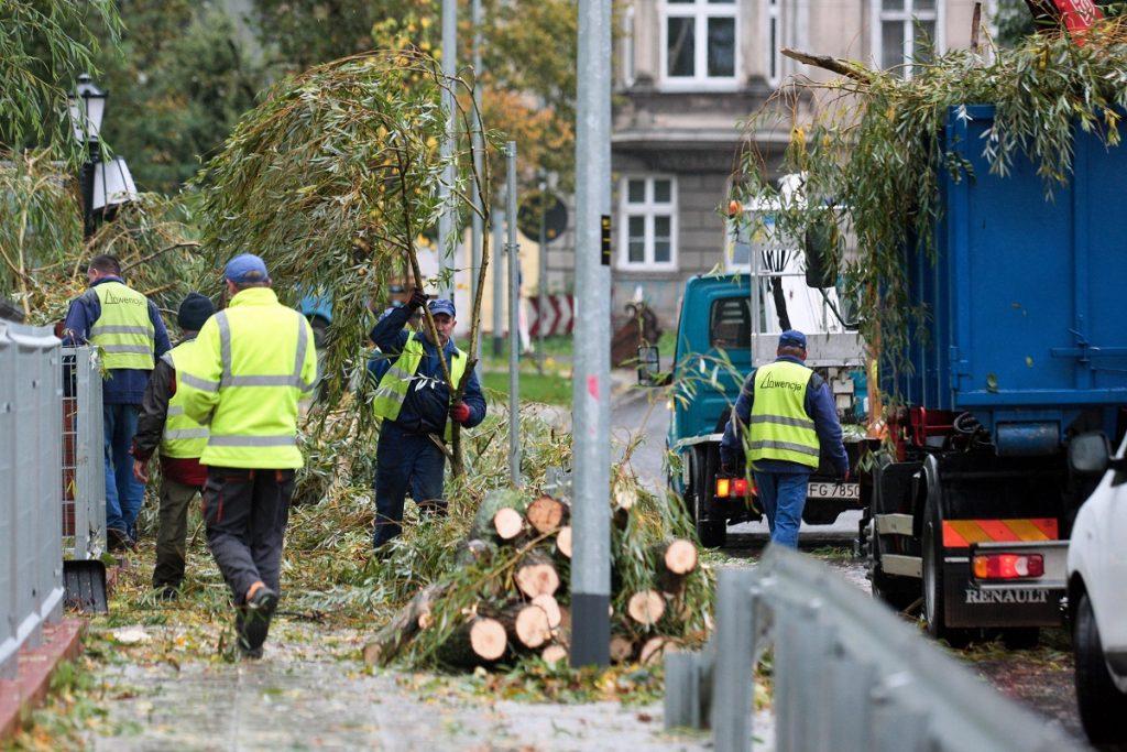 Gorzów Wielkopolski, 2017. október 6. A Xavier elnevezésû viharban kidõlt fákat darabolják városi dolgozók a nyugat-lengyelországi Gorzów Wielkopolskiban 2017. október 6-án. Az elõzõ éjjeli viharban ketten meghaltak és harminckilencen megsérültek, a térségben közel 840 ezer háztartás maradt áram nélkül. (MTI/EPA/Lech Muszynski)