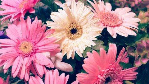 flower wedding decoration, beautiful gerbera flower blooming, vintage tone background