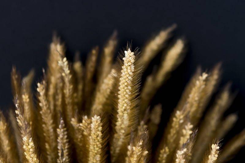 Barley low key and dark background