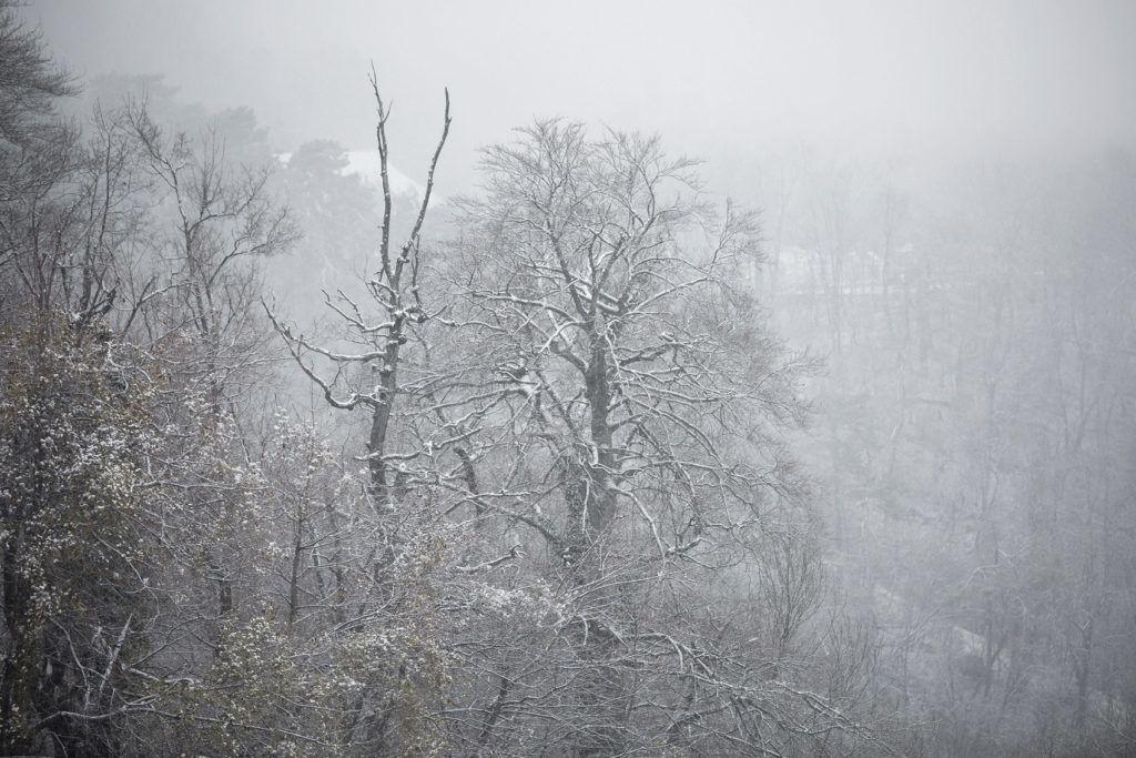 Budapest, 2017. november 29. A behavazott Normafa Budapesten 2017. november 29-én. MTI Fotó: Mohai Balázs