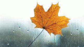 Meteorology, forecasting and autumn weather season concept - yellow maple leaf stuck to wet the glass window with the rain drops