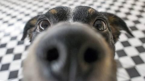 Funny dog closeup