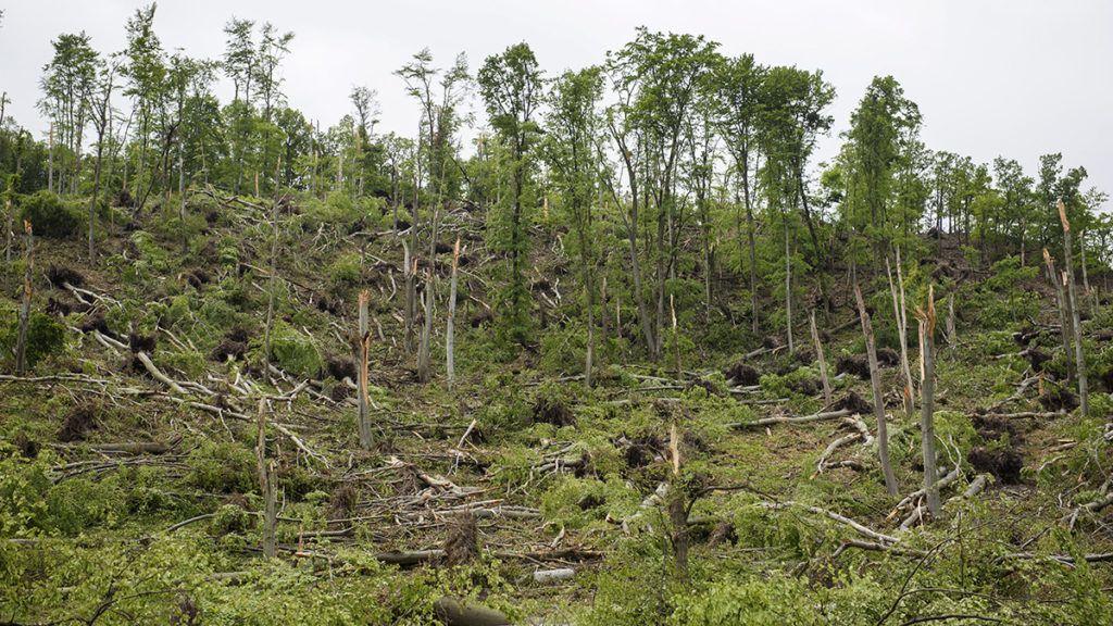 Recsk, 2017. május 10.Viharban elpusztult fák a Mátrában, Recsk közelében 2017. május 10-én. A múlt heti forgószél következtében az első becslések szerint ötezer köbméter faanyag veszett kárba tízhektárnyi területen.MTI Fotó: Komka Péter