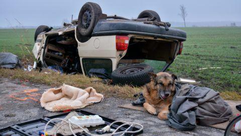 Apostag, 2017. december 14. Az elhunyt kutyája fekszik egy tetejére borult, összeroncsolódott személyautó mellett az Apostag és Dunaegyháza közötti úton 2017. december 14-én. A jármû hajnalban eddig tisztázatlan körülmények között letért az útról és egy fának ütközve felborult. Vezetõje a helyszínen meghalt. MTI Fotó: Donka Ferenc
