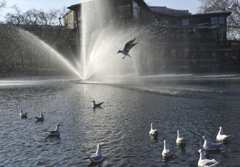 Budapest, 2017. december 25. Sirályok a napsütésben a Városligeti-tónál a 2017. december 25-én. Budapesten karácsony elsõ napján szinte tavaszias volt az idõjárás, a legmelegebb órákban plusz 10 Celsius-fokot mértek. MTI Fotó: Bruzák Noémi