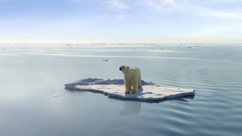 A polar bear managed to get on one of the last ice floes floating in the Arctic sea. Due to global warming the natural environment of the polar bear in the Arctic has changed a lot. The Arctic sea has much less ice than it had some years ago. (This images is a photoshop design. Polarbear, ice floe, ocean and sky are real, they were just not together in the way they are now)