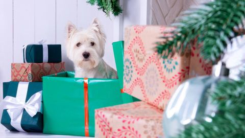 West highland white terrier dog as symbol of 2018 New Year and