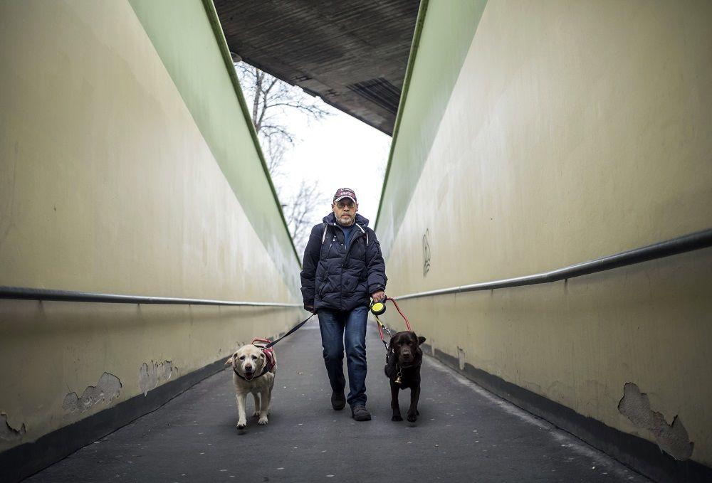 Budapest, 2017. december 13. Az aliglátó Tanai Csaba vakvezetõ labrador kutyáival, a 11 és fél éves Enyával és a 4 éves Boncával (sötétbarna) a Kacsóh Pongrácz úti aluljárónál 2017. december 13-án. A férfi idõs segítõ kutyája, Enya 8 éves kora óta nem tudja ellátni feladatát, azóta Bonca vezeti õket. Tanai Csaba természetesen továbbra is gondozza a hûségesen megszolgált Enyát. MTI Fotó: Mohai Balázs