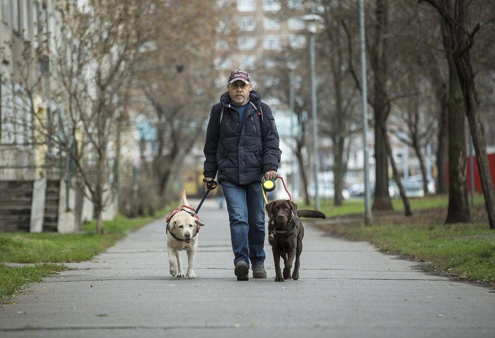 Budapest, 2017. december 13. Az aliglátó Tanai Csaba vakvezetõ labrador kutyáival, a 11 és fél éves Enyával és a 4 éves Boncával (sötétbarna) megy a XV. kerületben 2017. december 13-án. A férfi idõs segítõ kutyája, Enya 8 éves kora óta nem tudja ellátni feladatát, azóta Bonca vezeti õket. Tanai Csaba természetesen továbbra is gondozza a hûségesen megszolgált Enyát. MTI Fotó: Mohai Balázs