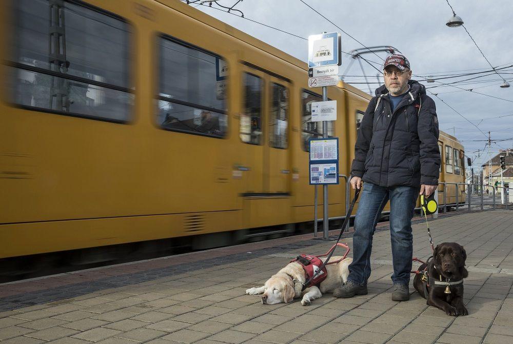 Budapest, 2017. december 13. A gyengénlátó Tanai Csaba vakvezetõ labrador kutyáival, a 11 és fél éves Enyával és a 4 éves Boncával (sötétbarna) villamosra vár a Bosnyák téren 2017. december 13-án. A férfi idõs segítõ kutyája, Enya 8 éves kora óta nem tudja ellátni feladatát, azóta Bonca vezeti õket. Tanai Csaba természetesen továbbra is gondozza a hûségesen megszolgált Enyát. MTI Fotó: Mohai Balázs