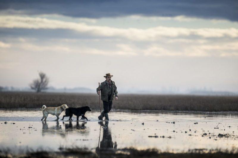 Fülöpszállás, 2018. január 4.Gulyás pásztorkutyákkal a bivalycsorda áthajtásán a Kiskunsági Nemzeti Park területén, a Kelemen-széki vizes területeken, Fülöpszállás közelében 2018. január 4-én. A mintegy 120 állatot a szabadszállási Zab-széki téli szállásukról a fülöpszállási Kígyós-háti állattartó telepre hajtották.MTI Fotó: Ujvári Sándor
