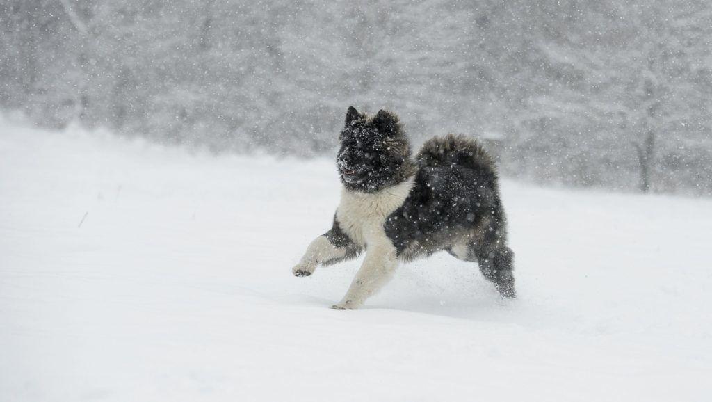 Salgótarján, 2018. január 21. Kutya szalad a hóesésben Salgótarján közelében 2018. január 21-én. MTI Fotó: Komka Péter