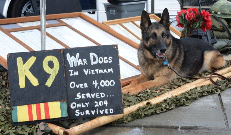 """Luke, a retired military working dog, sits next to the U.S. War Dogs Association display at the 2016 Shaw Air Expo and open house, nicknamed """"Thunder Over the Midlands,"""" at Shaw Air Force Base, S.C., May 21, 2016."""