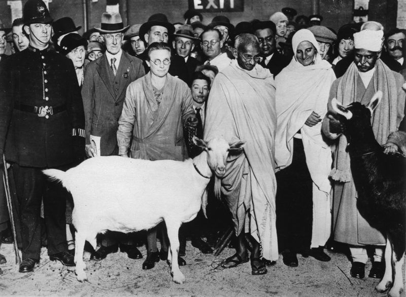 Indian pacifist Mahatma Gandhi visits an agricultural exhibition in London. Picture shows him with a goat, which he has acquired. Photograph. UK. 1934. (Photo by Imagno/Getty Images) Der indische Pazifist Mahatma Gandhi besucht eine Landwirtschaftsausstellung in London. Das Bild zeigt ihn mit einer Ziege die er erworben hat. Photographie. Grossbritannien. 1934.